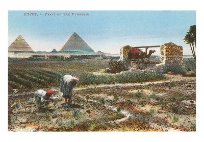 egypt_farming.jpg